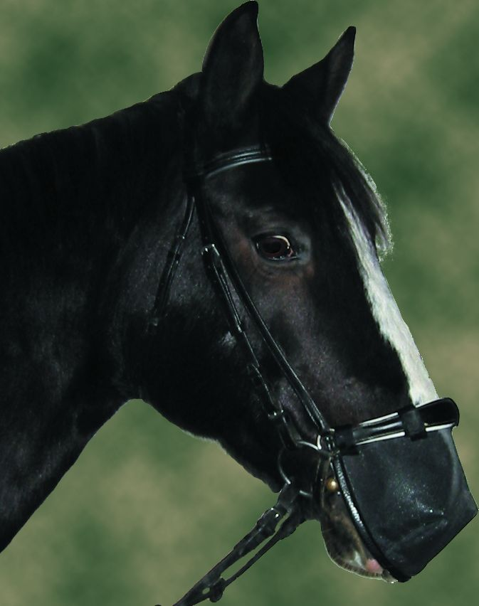 Nose Cover For Riding Bridles With Dropped Noseband